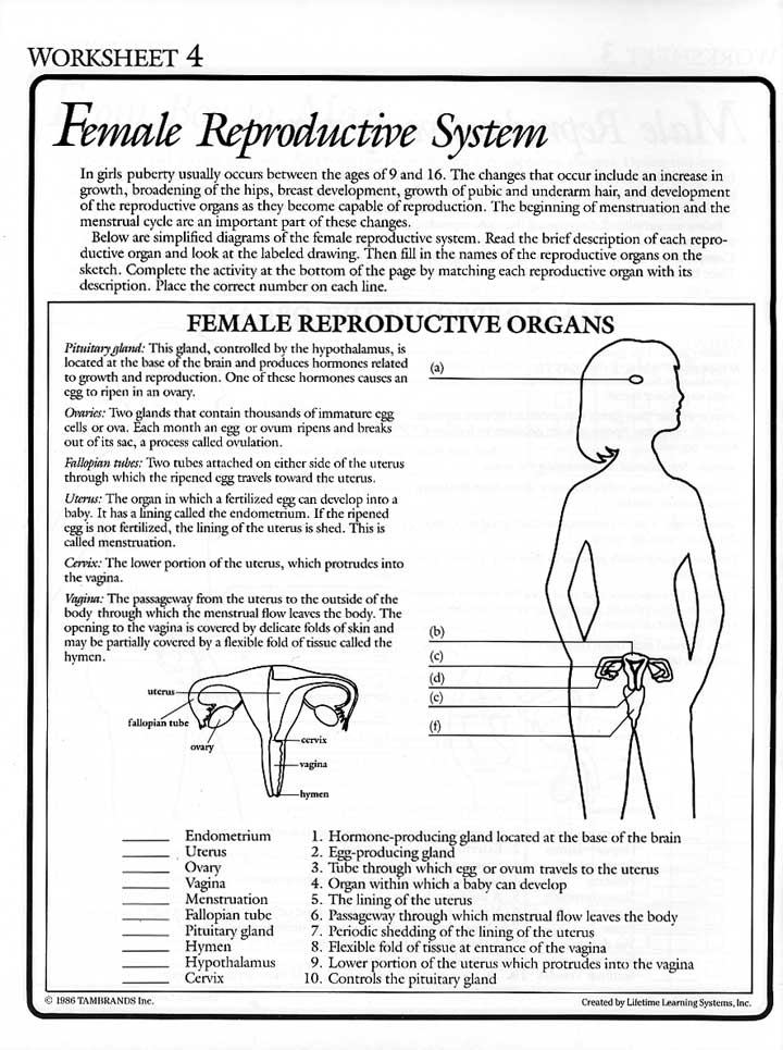 Printables Female Reproductive System Worksheet from fiction to fact 1986 at mum covers foreword forward contents tambrands educational program girl woman boy man male reproductive system female system
