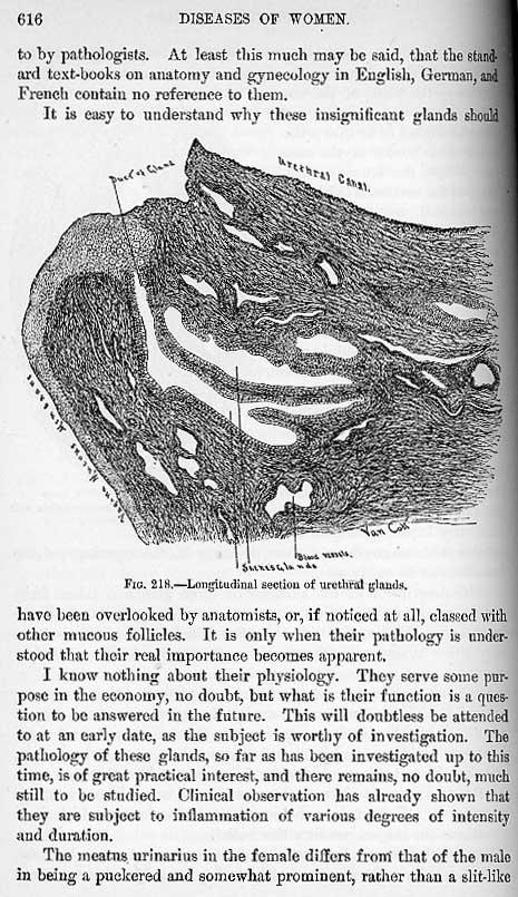Skenes gland